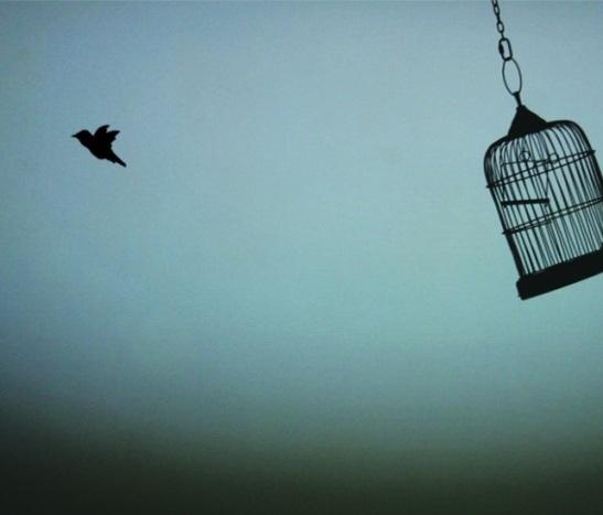bird-cage